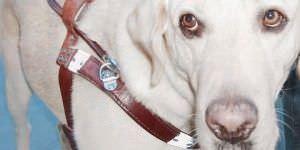 Los perros guía podrán entrar en todos los edificios públicos y lugares de trabajo.