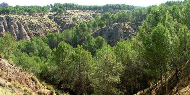 Alcala de Henares parque cerros
