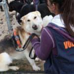 Los grandes parques de atracciones y de ocio, en pro de la adopción de mascotas