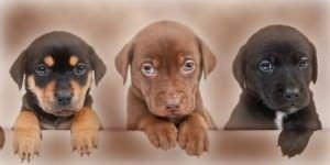Dos detenidos por venta falsa de cachorros a través de internet.