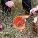 350 actividades medioambientales gratuitas para disfrutar del otoño