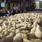 Madrid retoma su tradición ganadera por un día