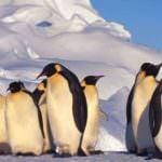 Marcha por el Clima  para evitar el cambio climático