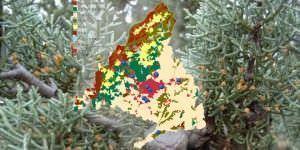Activado el sistema de información diaria sobre los niveles de polen en la región.