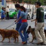 Dejar los excrementos de los perros sin limpiar: multa o trabajos de limpieza