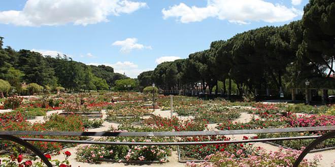 Concurso Rosas Nuevas Villa de Madrid 2017