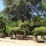 El Bosque Encantado, un paraíso de esculturas vivientes en la vegetación