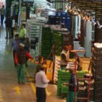 Mercamadrid abrirá sus puertas a los ciudadanos con visitas gratuitas