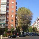 La caída de una rama acaba con la vida de un hombre en Moratalaz