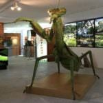 El mayor museo de insectos de Europa, en San Lorenzo de El Escorial