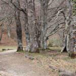 El Hayedo de Montejo, un paraje insólito en Madrid