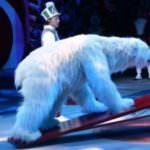 Los osos polares animatrónicos protagonizan el Circo Price en Navidad
