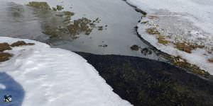 Primer plano de la laguna de Hoyos de La Pinilla
