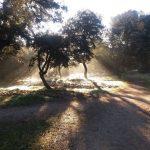 Ruta por el monte del Pilar: el bosque urbano de Majadahonda