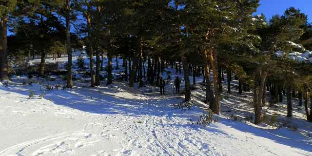 Ruta a la barranca y al mirador de las Canchas en Navacerrada