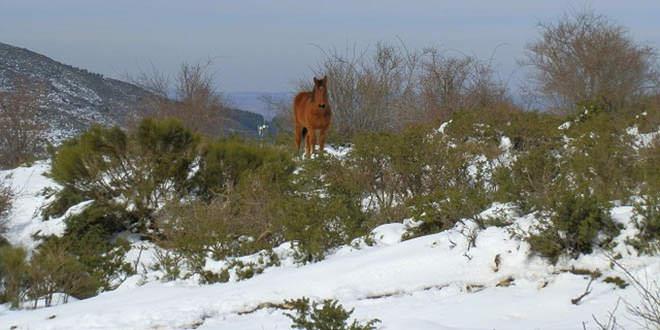Ruta a la Sierra Cebollera con nieve