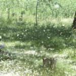 Los alérgicos disponen de información sobre los niveles de polen a través de SMS