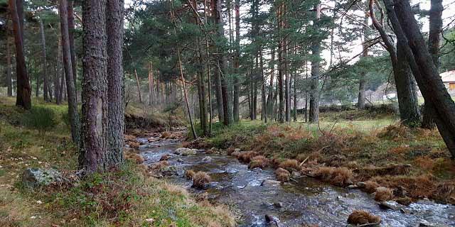 Río Moros en la ruta a la peña del Arcipreste de Hita