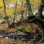 Ruta a Canencia: variedad y riqueza de flora en la Sierra Norte