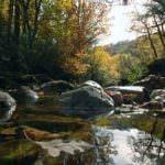 El Hayedo de Montejo, Patrimonio Natural de la Humanidad