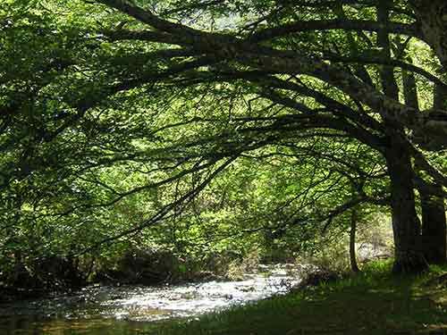 Hayedo de Montejo, declarado Patrimonio Natural de la Unesco