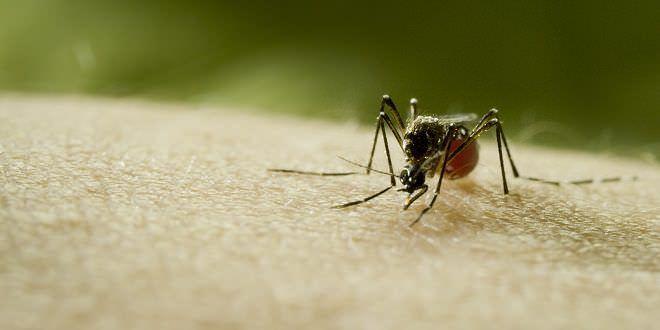 Mosquito | Créditos DSC.