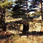 Vegetación Alto del León