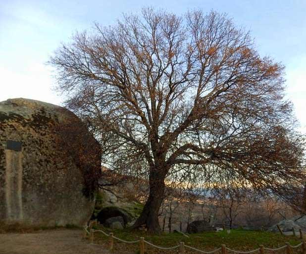 Arce Montpellier en la Ruta al bosque de la Herrería