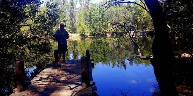 Bosque del Finlandés en la ruta al mirador de los robledos