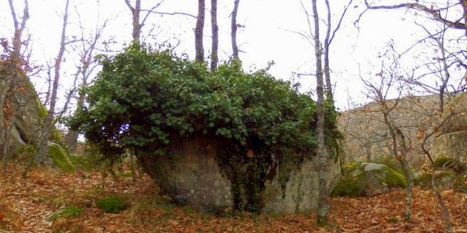 Rincón de la Hiedra en la Ruta al bosque de la Herrería