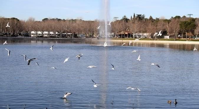 lago casa de campo renovado enero 2019