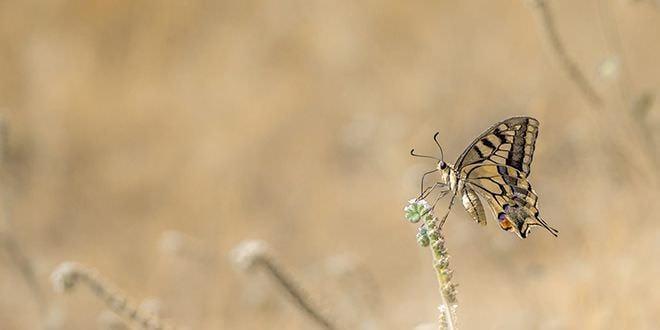 Observatorio mariposas