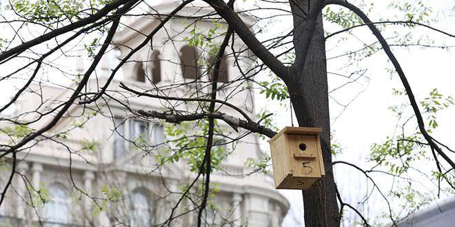 Cajas nido en Cibeles