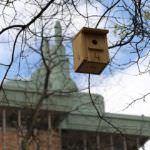 Nidos para pájaros en los árboles de Castellana