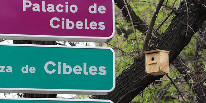 Cajas nido en árboles de Cibeles