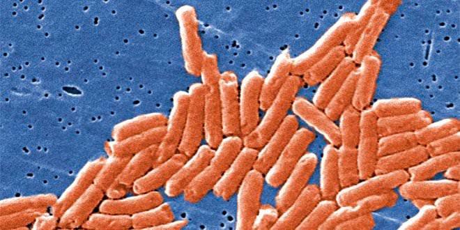 Salmonelosis Microscopio Laboratorio