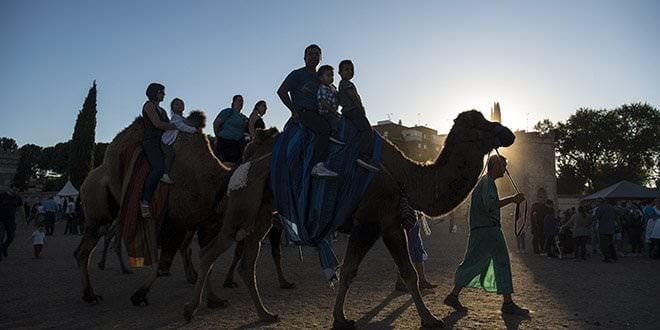 Mercado Cervantino camellos