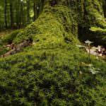 La recogida de musgo natural se sanciona con 2.000 euros