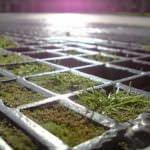 La recogida de musgo natural se sanciona con 2000 euros