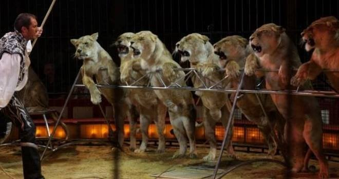 prohibidos circos con animales madrid