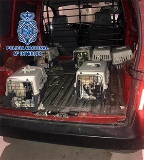 Criadero Chihuahuas Policía Nacional Meco