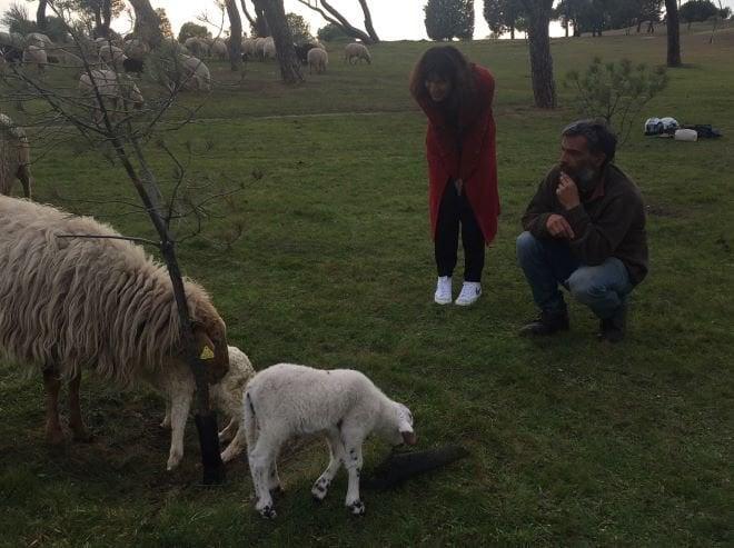 ovejas casa de campo