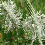 Información sobre los niveles de polen, en la Red Palinocam