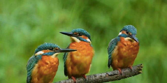 aves Casa de Campo