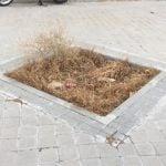 Se pavimentan los alcorques vacíos de aceras y vías públicas