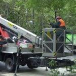 Plan de poda para más de 14.000 árboles