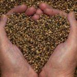4 beneficios que las semillas de cannabis aportan a tu salud