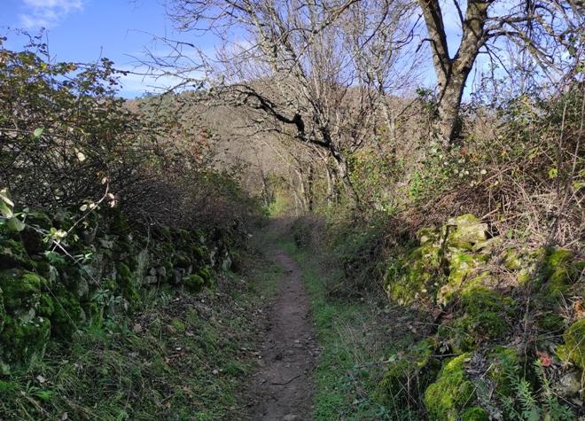 senda por el bosque de castaños