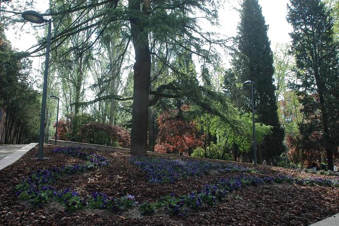 bosque parque isabel clara eugenia