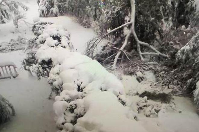 real jardín botánico nieve madrid